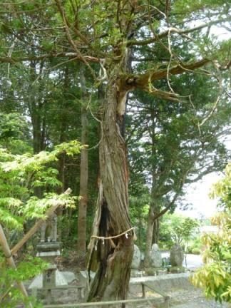 廣幡神社16.JPG