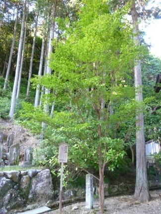 延算寺 東院06.JPG