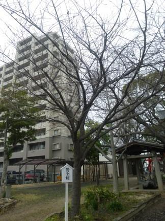 田光八幡社08.JPG