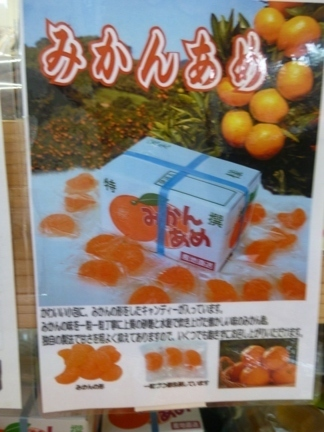 道の駅 紀宝町ウミガメ公園46.JPG