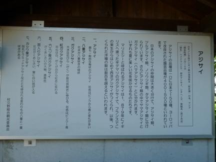 音楽寺15.JPG