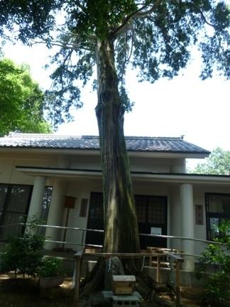 飯野神社21.JPG