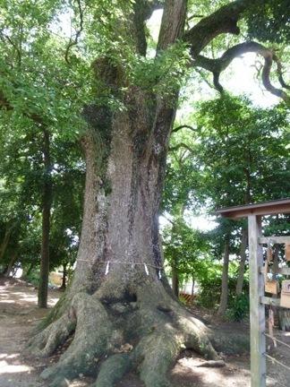 飯野神社22.JPG