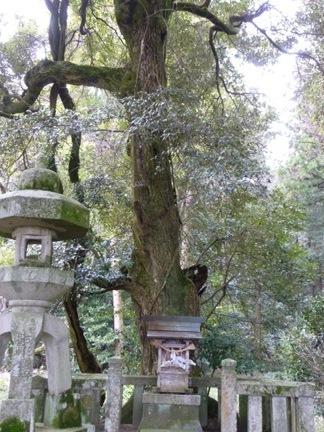 伊富岐神社27.JPG