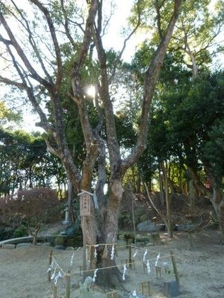 玉鉾神社54.JPG