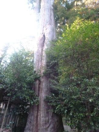 竹原神社24.JPG