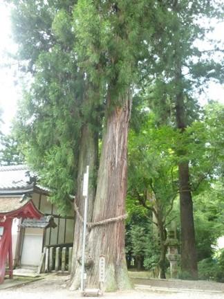 美濃八幡神社10.JPG